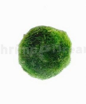 Moss ball - pequena