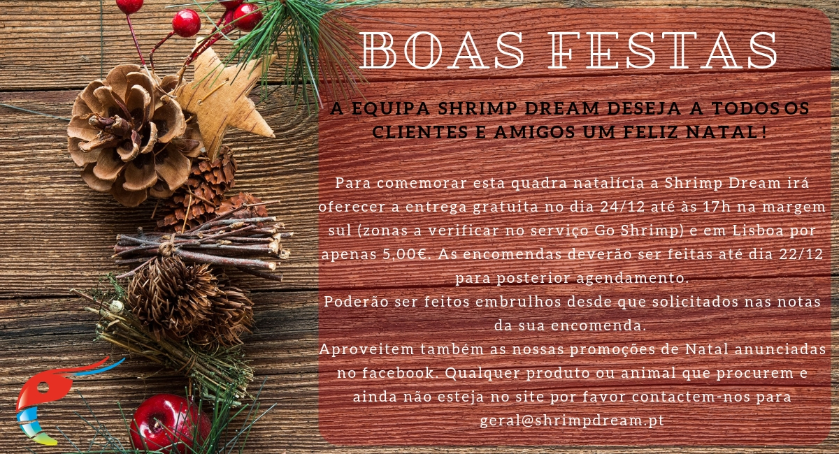 Banner Shrimp Dream_Boas Festas 2018